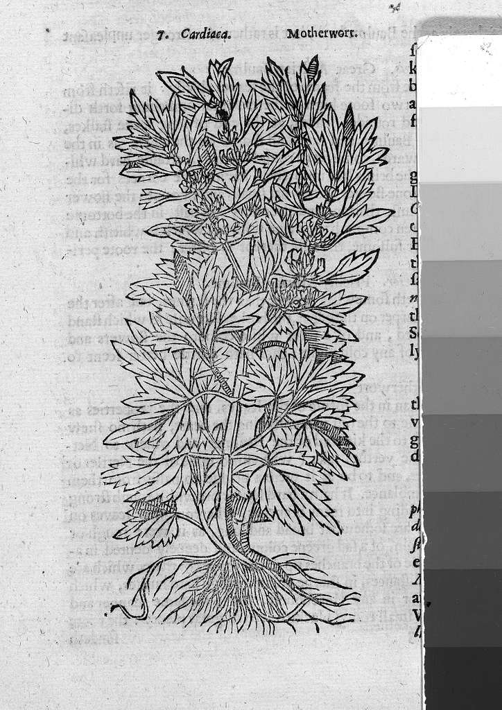 Theatrum Botanicum, the Theatre of Plants or An Universal and Compleat Herball.