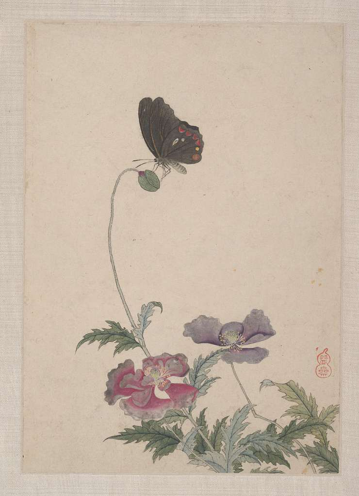 Birds, Insects and Flowers